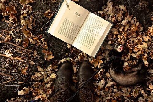 fallbook